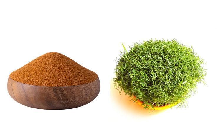طرز تهیه سبزه خاکشیر برای عید با 4 روش مختلف