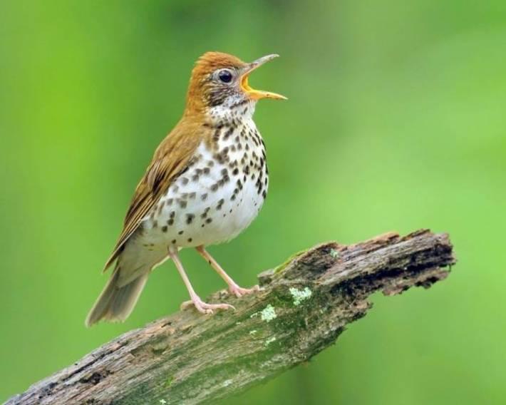رمزی جالب در پس آواز خواندن پرندگان